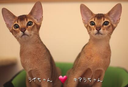 2009_1005_03.jpg
